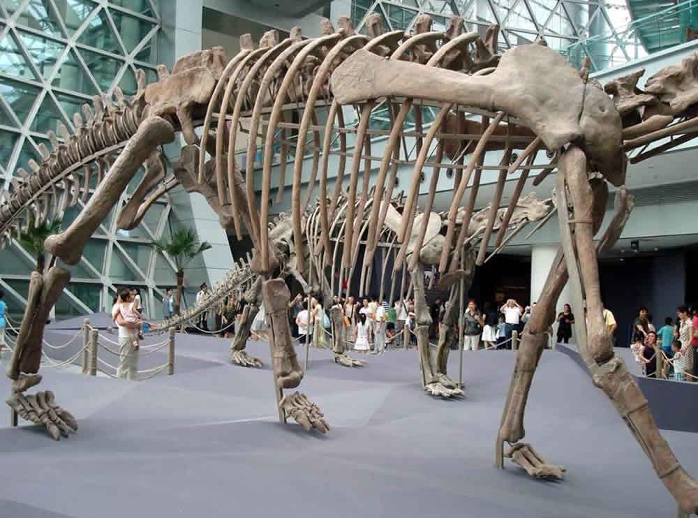 Dinosaur Museum in Zigong