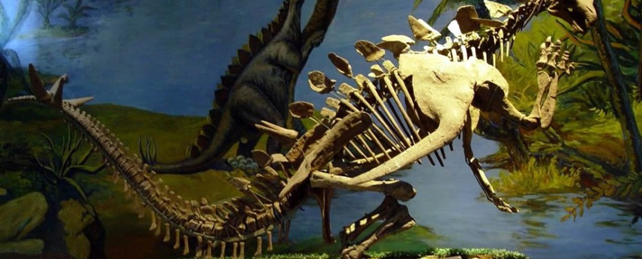 Zigong China  city photos : Dinosaur Museum in Zigong Travel China ...