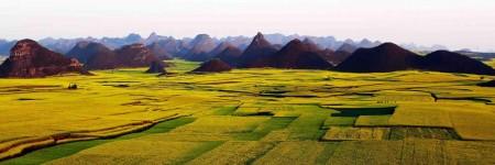 Luoping Rapeseed Fields