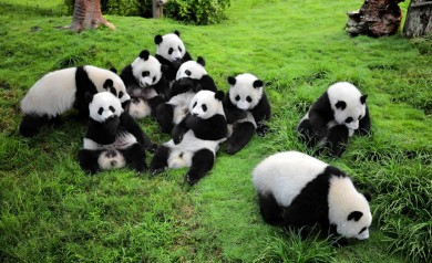 Sichuan Wolong National Panda Natural Reserve